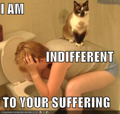Favorite Lolcats Funny Pictures Cat Vomiting Person