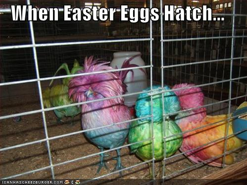 My Favorite Lolcats » funny-pictures-easter-egg-birds